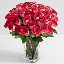flowers roses 36 pink pearl roses