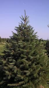 crossen christmas tree farm in genesee county right between