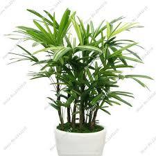 Indoor Plant For Office Desk Indoor Tree Plants Low Light Indoor Plants Low Light Indoor