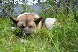 Comfortable Dog Free Images Nature Grass Meadow Animal Cute Wildlife Pet