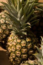 how to care for a pineapple plant hunker