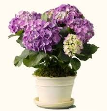 potted flowers diy potted plant centerpiece stylish spoon