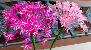 allium flowers paper flowers allium flower 99