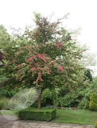 543 best arbres images on gardens landscaping and