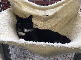 can you offer a home to rspca stapeley grange cattery u0027s two most