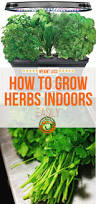 Winter Indoor Garden - 42 best life with the aerogarden images on pinterest indoor