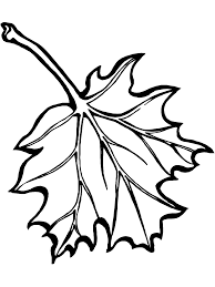 maple leaf coloring pages bestofcoloring com