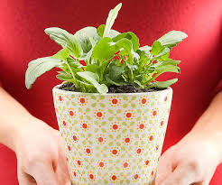 Plants For The Bedroom by About The Use Of Plants In The Bedroom For Feng Shui