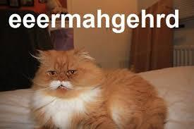 Persian Cat Meme - oki the moustache cat know your meme