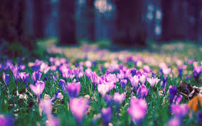 spring backgrounds wallpapers group 84