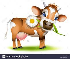 agriculture farming milk cow farm cattle calf jersey