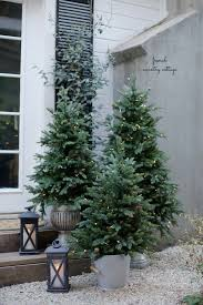potted christmas tree in stature but high on impact these potted trees make for
