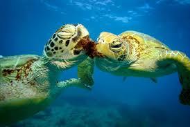 imagenes tortugas verdes las 5 cosas que no sabías de las tortugas