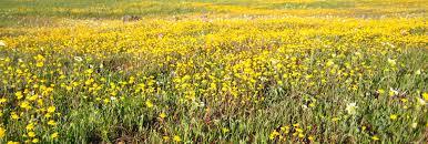 ca native plant society native plant legislation victory conservation u0026 east bay