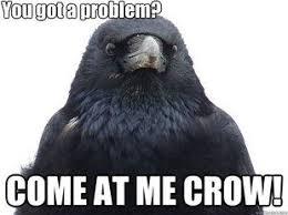 Crow Meme - come at me crow meme mne vse pohuj