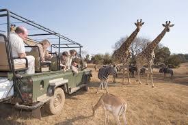 safari best game reserves for safaris near cape town