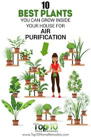 best indoor house plants 10 best plants you can grow indoors for air purification plants