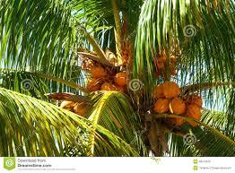 miami stock photo image of sand florida landmark 39588792