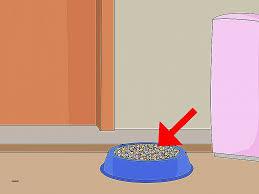 comment faire partir des moucherons dans une cuisine comment faire partir des moucherons dans une cuisine 4 res