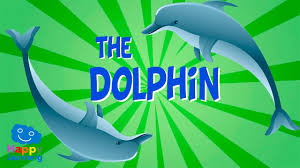 the dolphin educational video for kids youtube