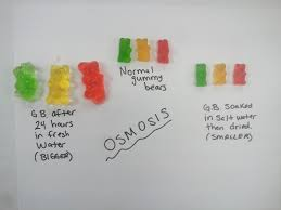 awesome growing gummy bear experiment 70 in home interior
