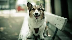 dog wallpapers download 50 free hd dog wallpapers