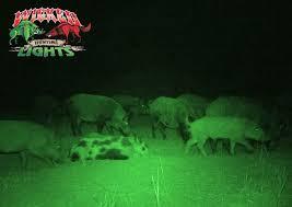 hog hunting lights for feeder nice feeder lights for hog hunting 5 feeder lights mtmbilab com
