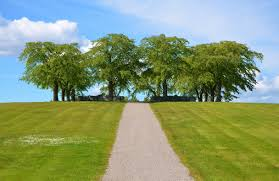 free stock photo of pathway to some trees domain photo
