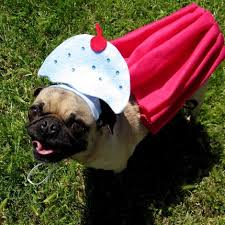 Halloween Costumes Dogs Cutest Puppy Costumes 2011 Perfect Pet Costumes Halloween Nope Don U0027t U0027s