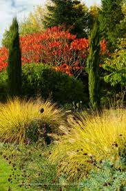pennisetum alopecuroides japonicum rhus typhina plants