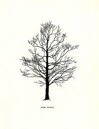 pine tree search tattoos pine tree