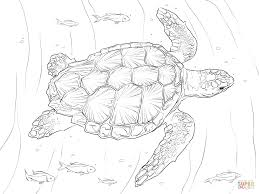 loggerhead turtle coloring page free printable coloring pages