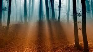 wallpaper forest 4k 5k wallpaper trees sunlight fog autumn