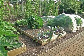 How To Make A Raised Bed Vegetable Garden - raised beds rhs gardening