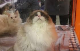 Happy Cat Meme - create meme happy cat
