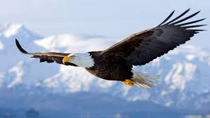 Department Of The Interior Doi Three Ways Trump U0027s U201cstarvation Budget U201d Threatens Wildlife Nrdc