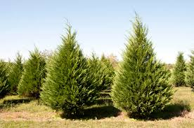Tree Care Tips To Make by Gardening In Mississippi November 2012