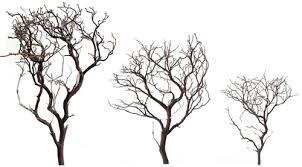 manzanita branch manzanita sle pack 12 18 24 blooms branches