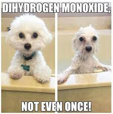 Chemistry Dog Meme - 10 best j纉kutya images on pinterest animals funny dogs and dog