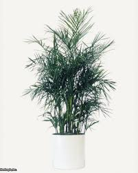cleaning indoor air with plants hgtv