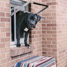 Patio Doors With Venting Sidelites by Door French Door With Dog Door Awesome Dog Door In French Door