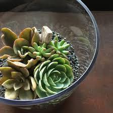 craft mnl succulent terrarium bowl making november 11 2pm u2013 5pm