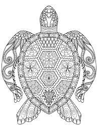 25 wood turtle ideas pins turtle