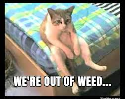 Stoner Dog Meme Generator - stoner cat funny marijuana memes out of weed meme