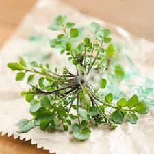 Herb Robert Pictures Getty Images 8 Best Herbs And Spices For Your Brain Prevention