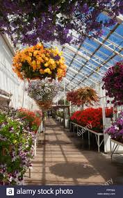 duthie park winter gardens aberdeen scotland stock photo