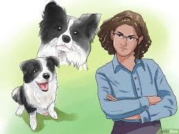 comment empecher chien de monter sur le canapé comment empêcher un chien de quémander 12 é