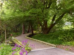 Urban Gardens San Francisco - fabulous sf botanical garden san francisco botanical garden urban