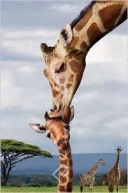 imagenes de jirafas bebes animadas para colorear imagenes de jirafas bebes recien nacida ideas para dibujar