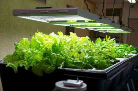 grow lights for indoor herb garden learn to create your own grow lights to keep your indoor plants in